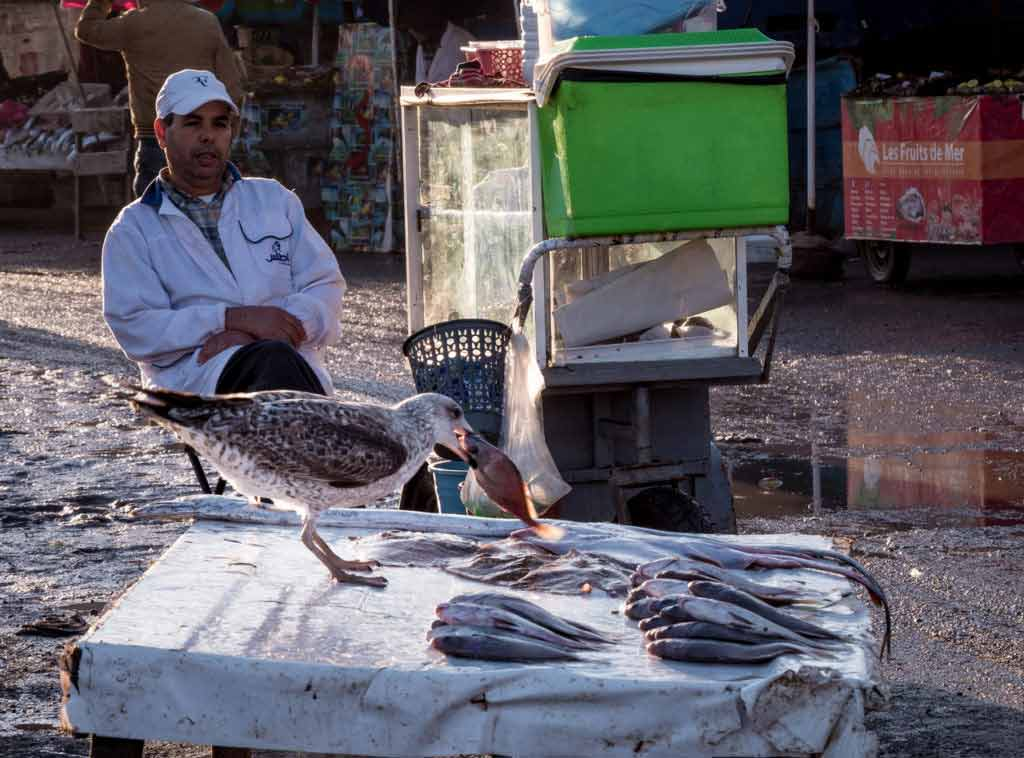 Рыбацкий порт в городе Эс-Сувейра чайка ворует