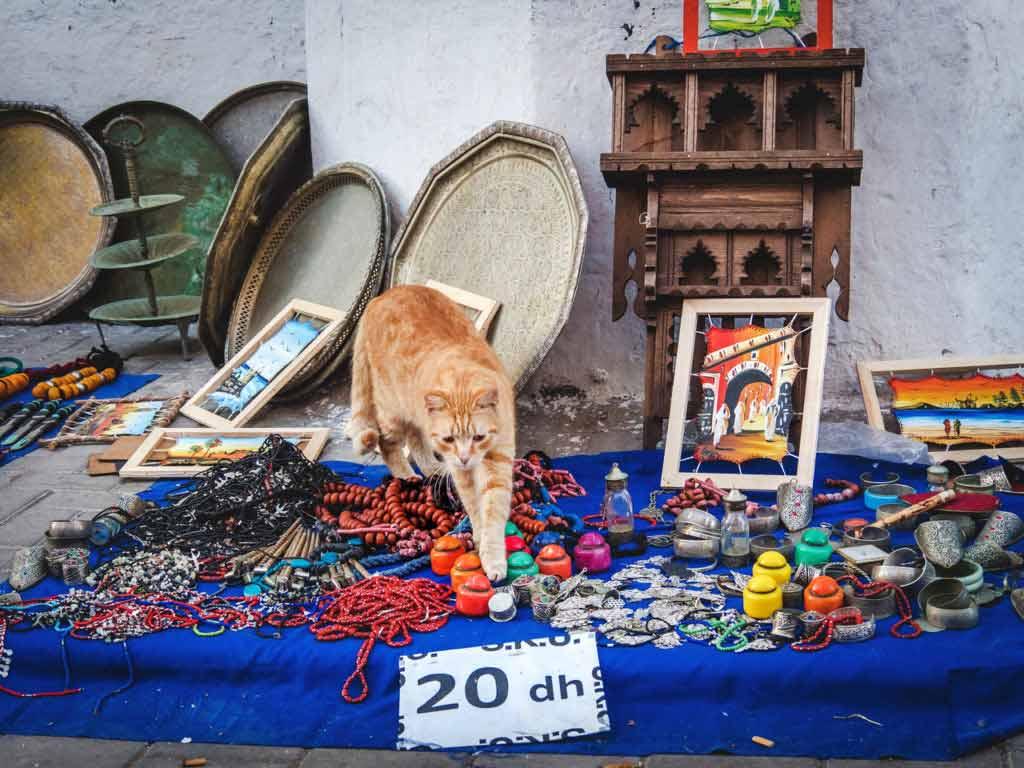 Воскресный базар в Эс-Сувейра, рыжий кот